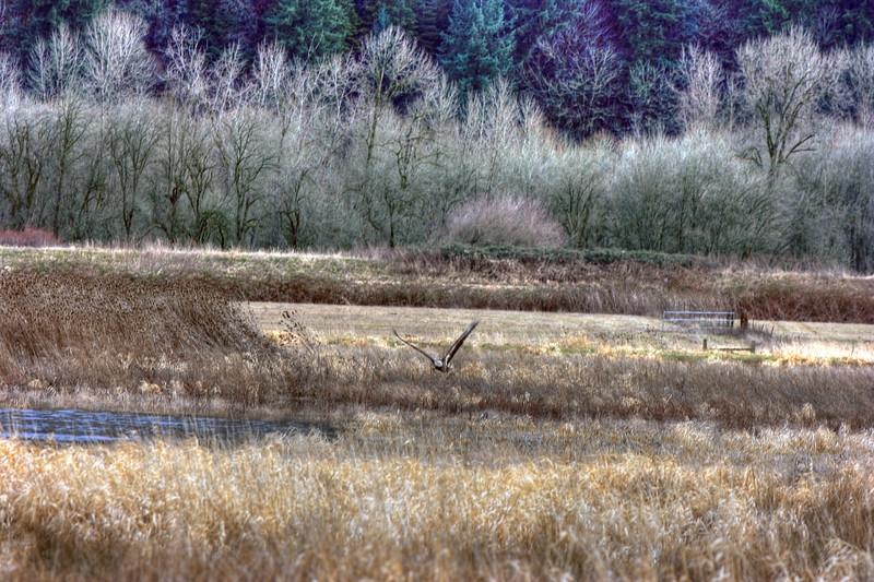 Eagle refuge