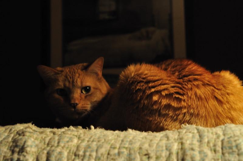 Cats_0007