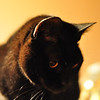 Cats_0004