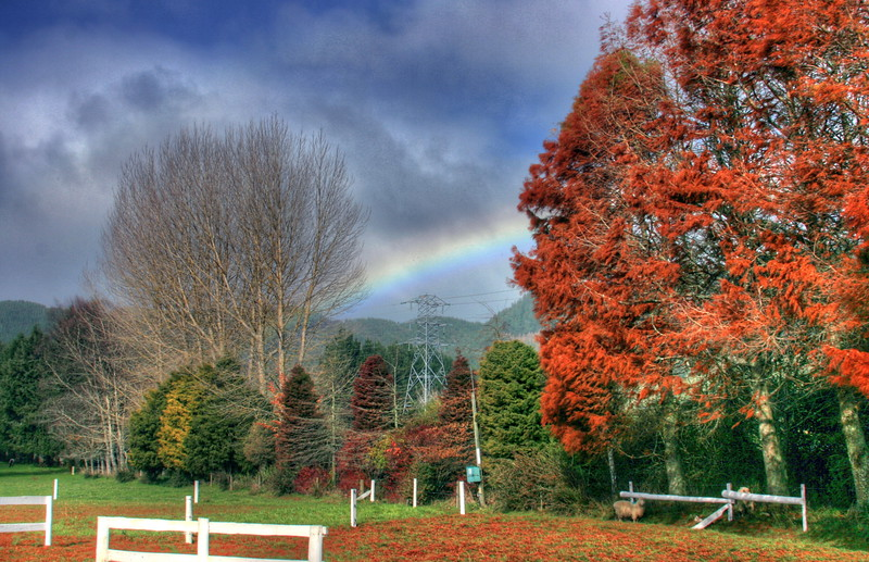 New Zealand Fall2.jpg