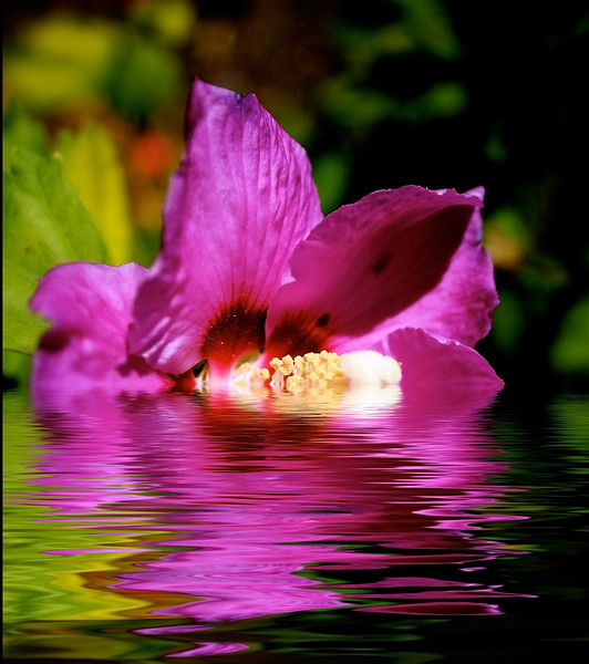 magenta flower flooded.jpg