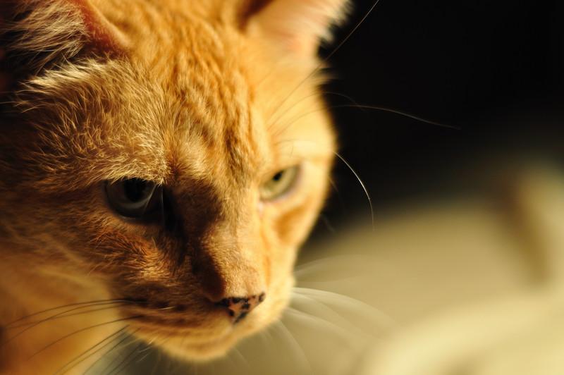 Cats_0002