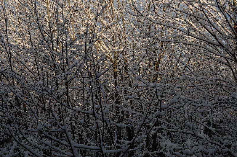Snowday_0021_color