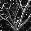 Snowday_0013