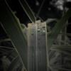 Grasses_20090823_0058