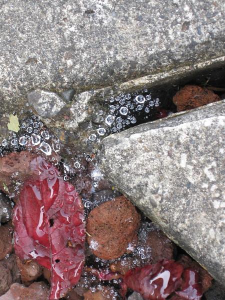 dew drops in the rocks