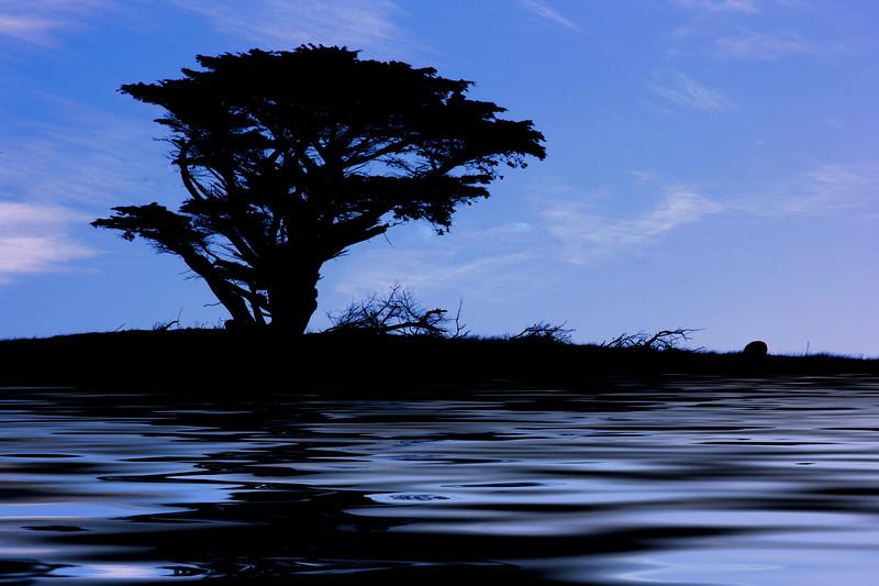 blue tree flooded.jpg