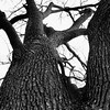 Tree2_BW