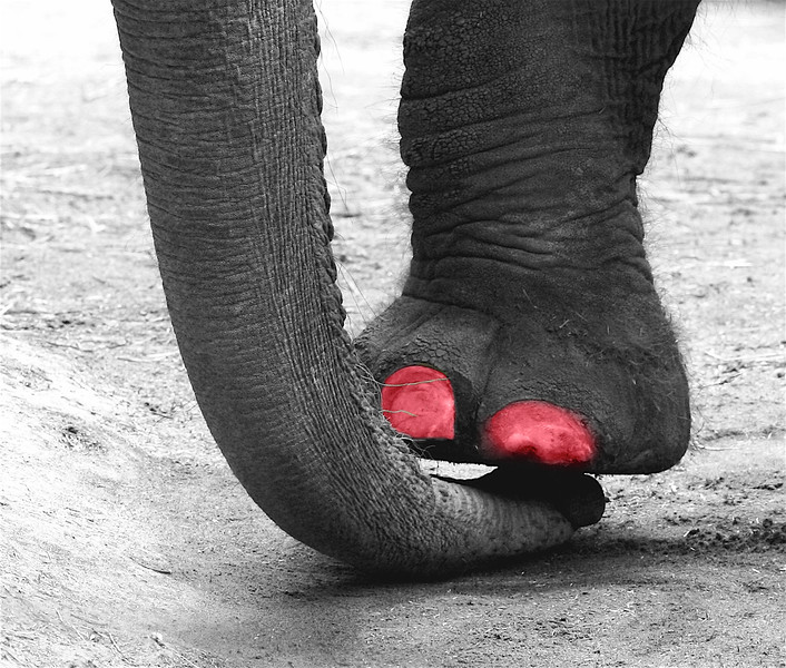 painted toes.jpg