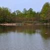 Pond_20090429_0382