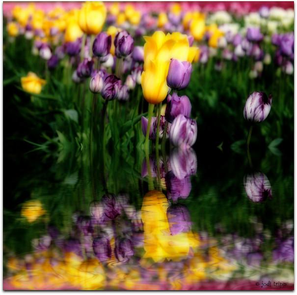 Easter Tulips.jpg