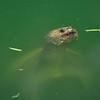 Turtle_20090806_0013