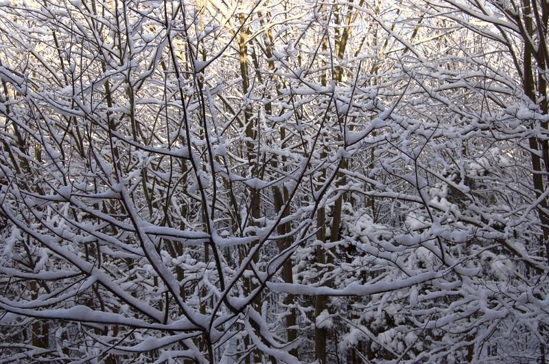 Snowday_0020adj