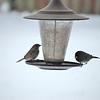 Birds_Color