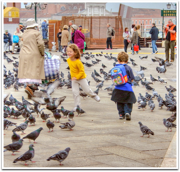 pigeon chasing.jpg