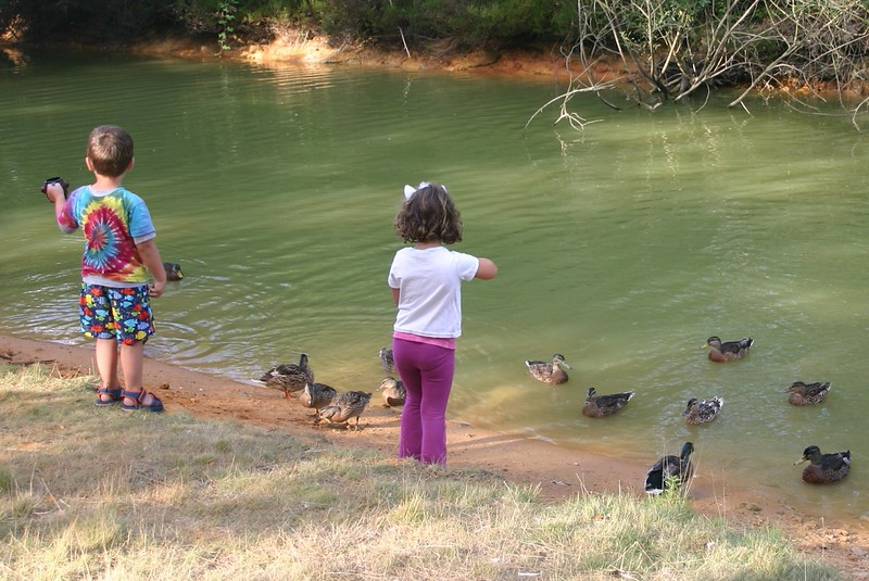 Feeding the ducks (CP)