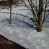 Snowday_0033_color