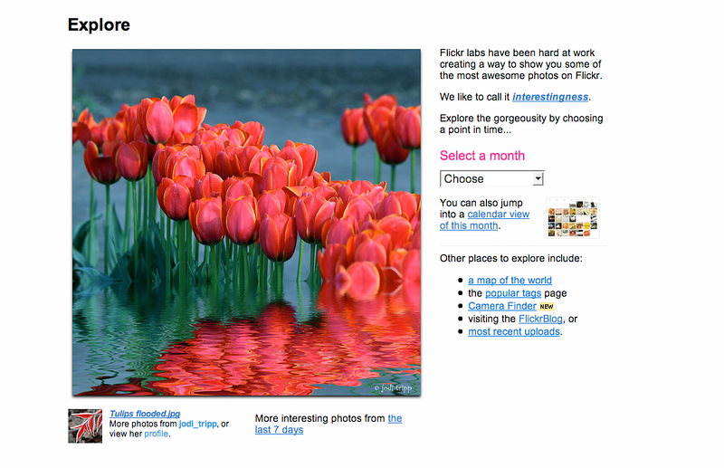 Tulips flood explore.png