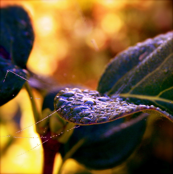 Autumn dew drops