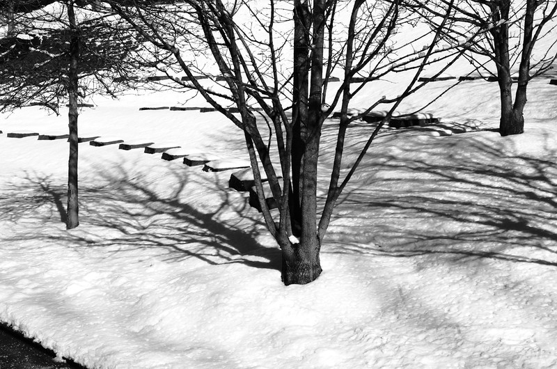 Snowday_0034adj