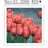 tulips 20.png