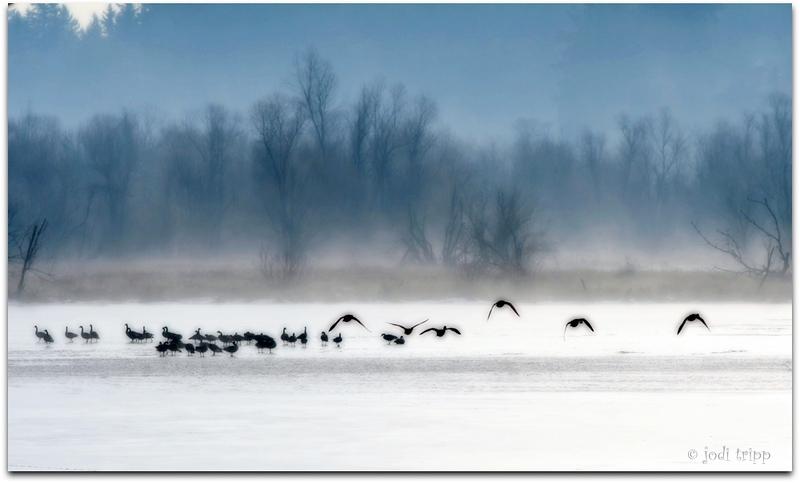 ducks orton