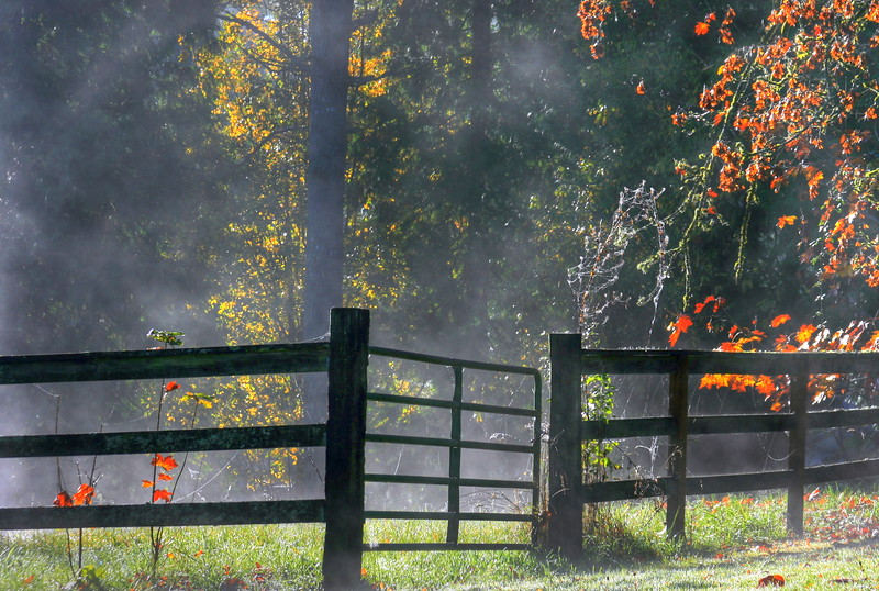 behind the rural fence