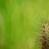 Grass_20090817_0035