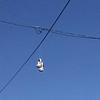 Nice shoes. dtla