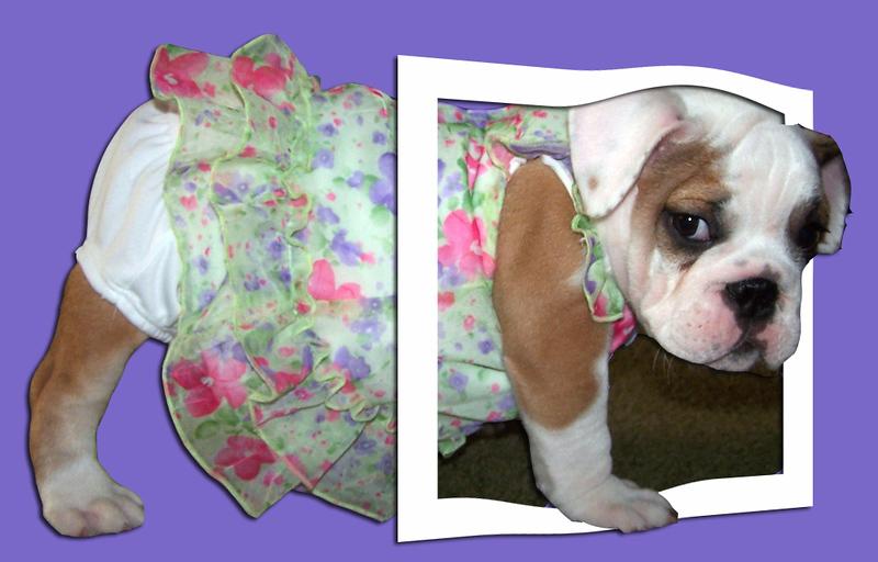 Matilda on Purple