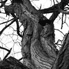 Tree1_BW