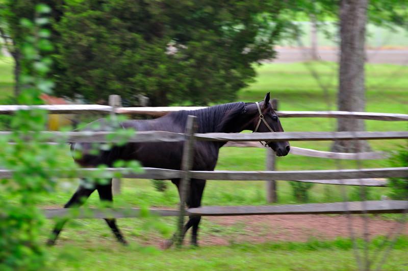 Horse_20090811_0046