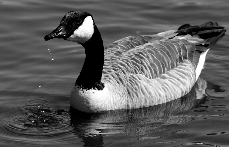 goose water drops