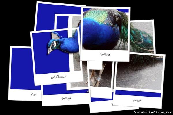 peacock Hockneyized