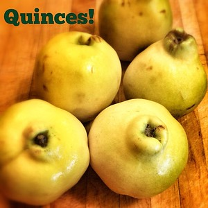 Wishing the rose-like smell of these stubby quinces could pervade your Instagram feed today!