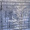 Snowday_0024adj
