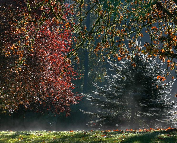 Magical x-mas tree