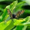 Butterfly9_5_20090807_0027