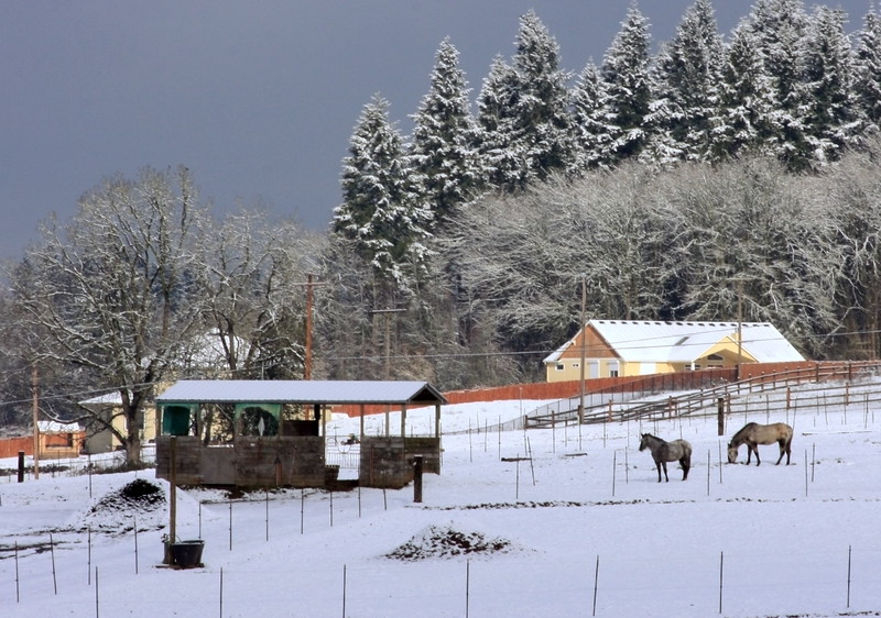 horse stables winter