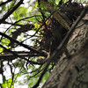 Nest_20090819_0039