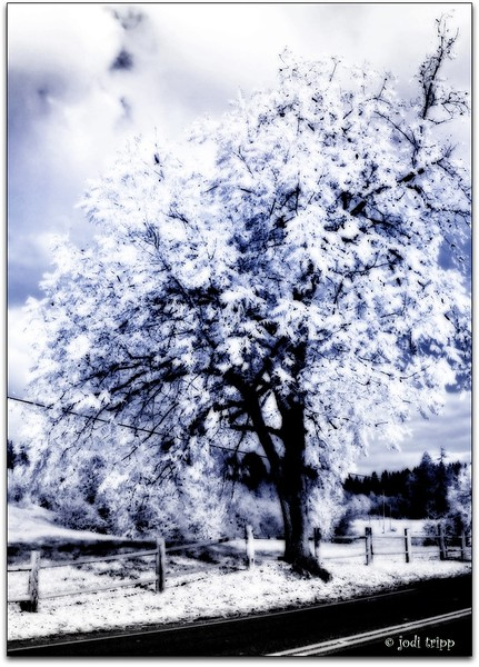 TREE INFRA -RED