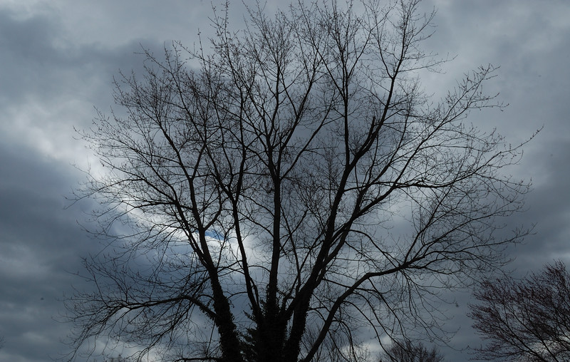 TreeSky1