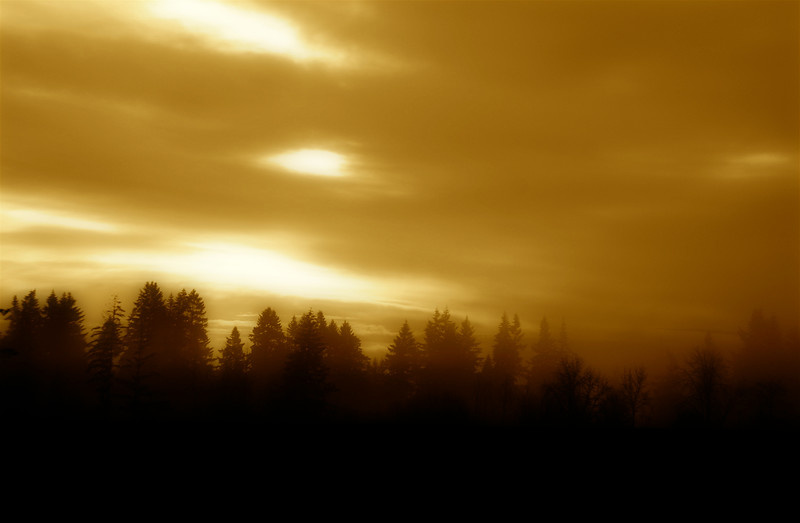 FOGGY SUNRISE IN SEPIA