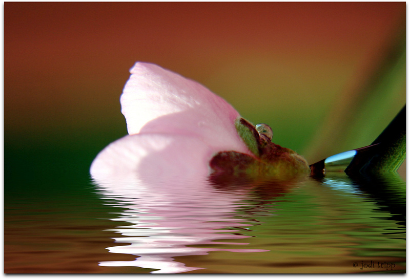 Spring Reflected.jpg