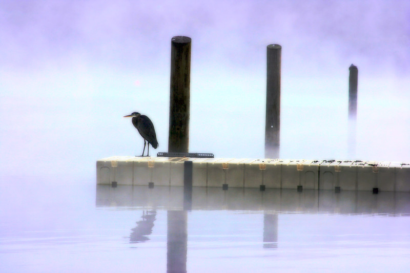 big bird in fog 4.jpg