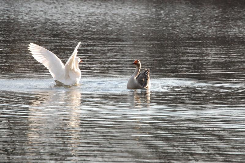 Bath Ducks 3
