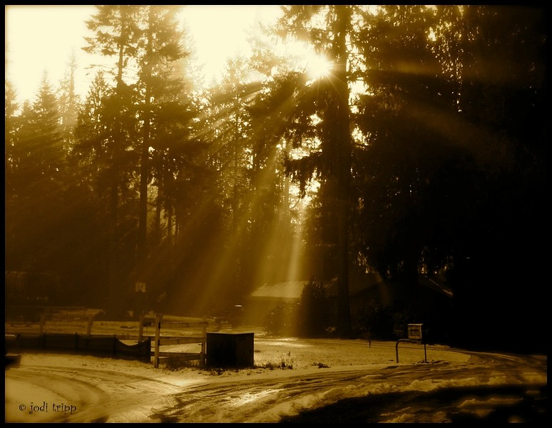 Winter Sunburst in Sepia