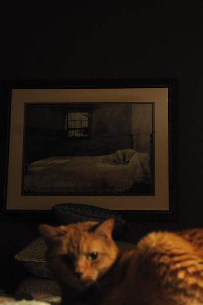 Cats_0006