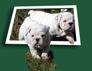 Out of bounds bulldogs copy.jpg
