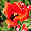 Flower_20090425_0007